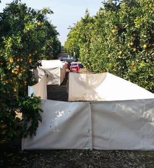 Tulare County sheriff's deputies were calledto an orange grove in the area of Avenue 320 and Road 228 in Woodlakeregarding a possible cockfighting ring.
