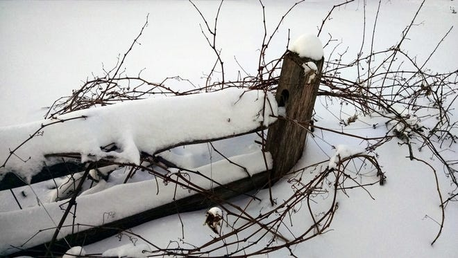Winter was a time for resting, just as the grape vines in this photo are resting, waiting for the snow to melt and spring to arrive.