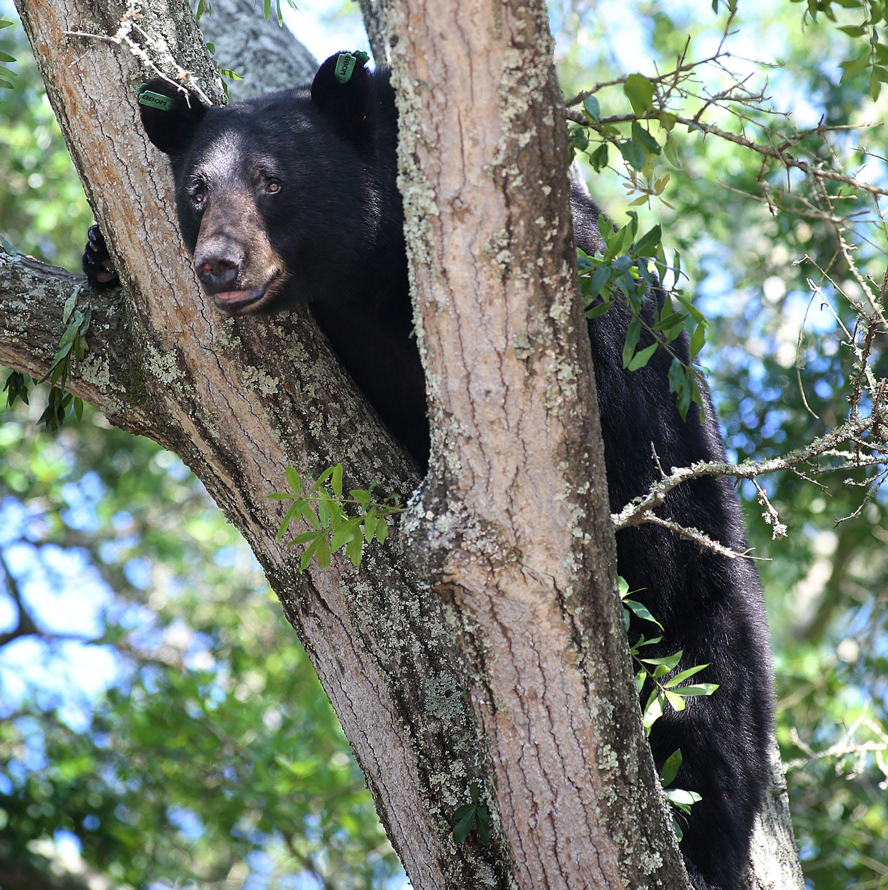"""A 3-year-old boy who was missing for two days says he """"hung out with a bear."""""""
