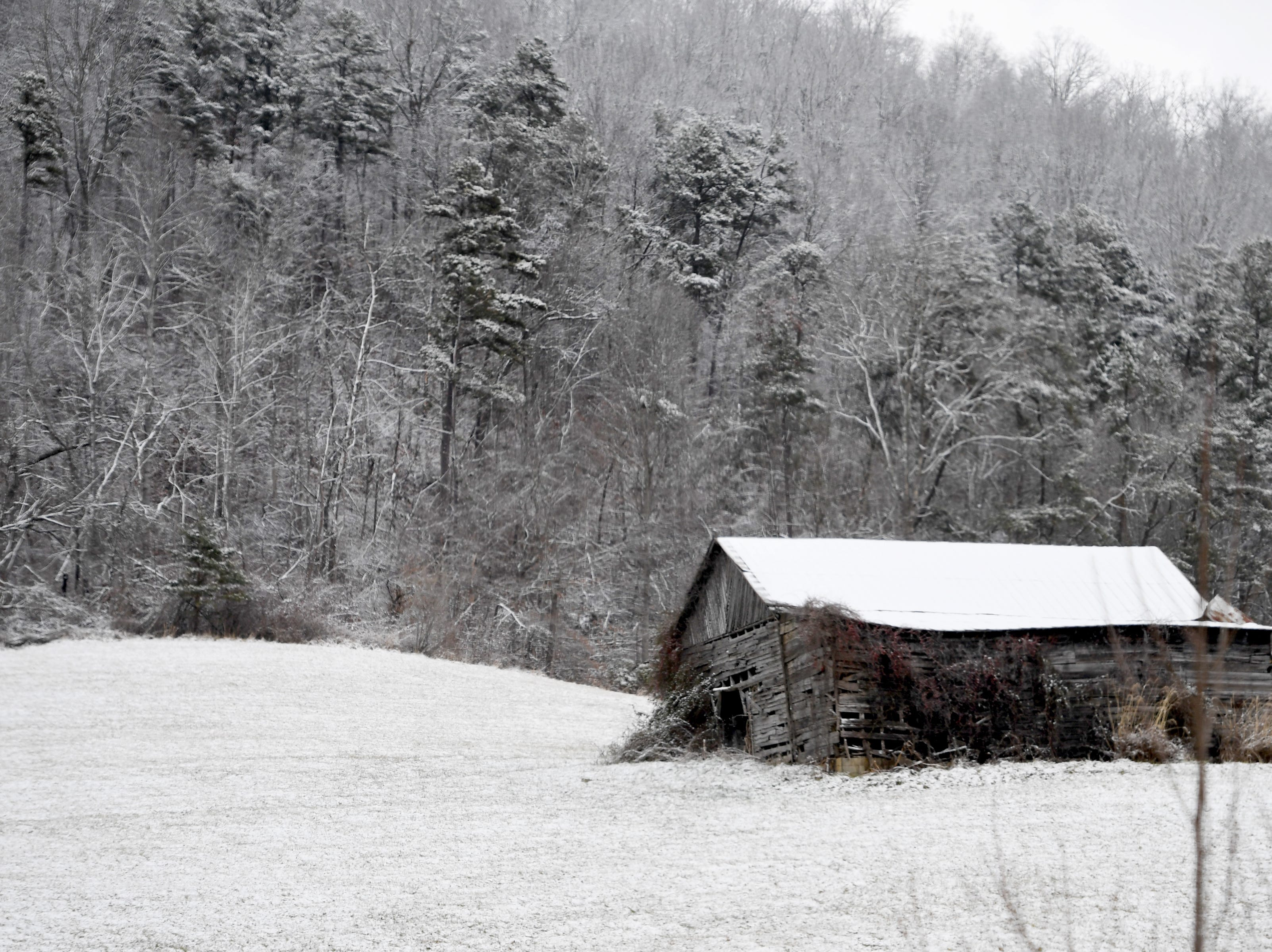 Northern Buncombe County, near Barnardsville, was blanketed in a thin layer of snow on Jan. 29, 2019.