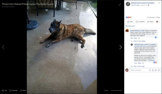 The Retired Police Canine Foundation posted a photo of a Endy, Retired U.S Customs and Border Patrol K9. Endy got spooked by fireworks on New Year's Day and ran away in Kingsville. He was given to a rescue group. Endy's owner, a Border Patrol agent, has tried to get his dog back.