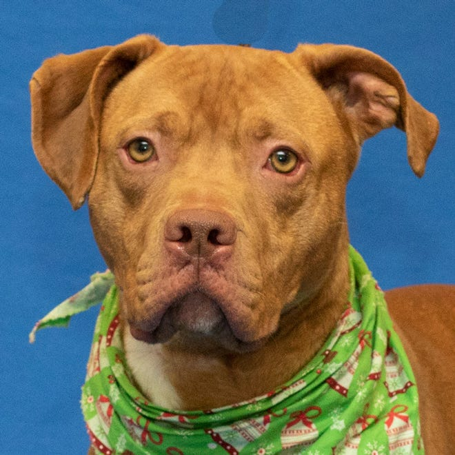The owner of Sterling, a dog adopted from the Michigan Humane Society, has been charged with killing the pit bull mix.