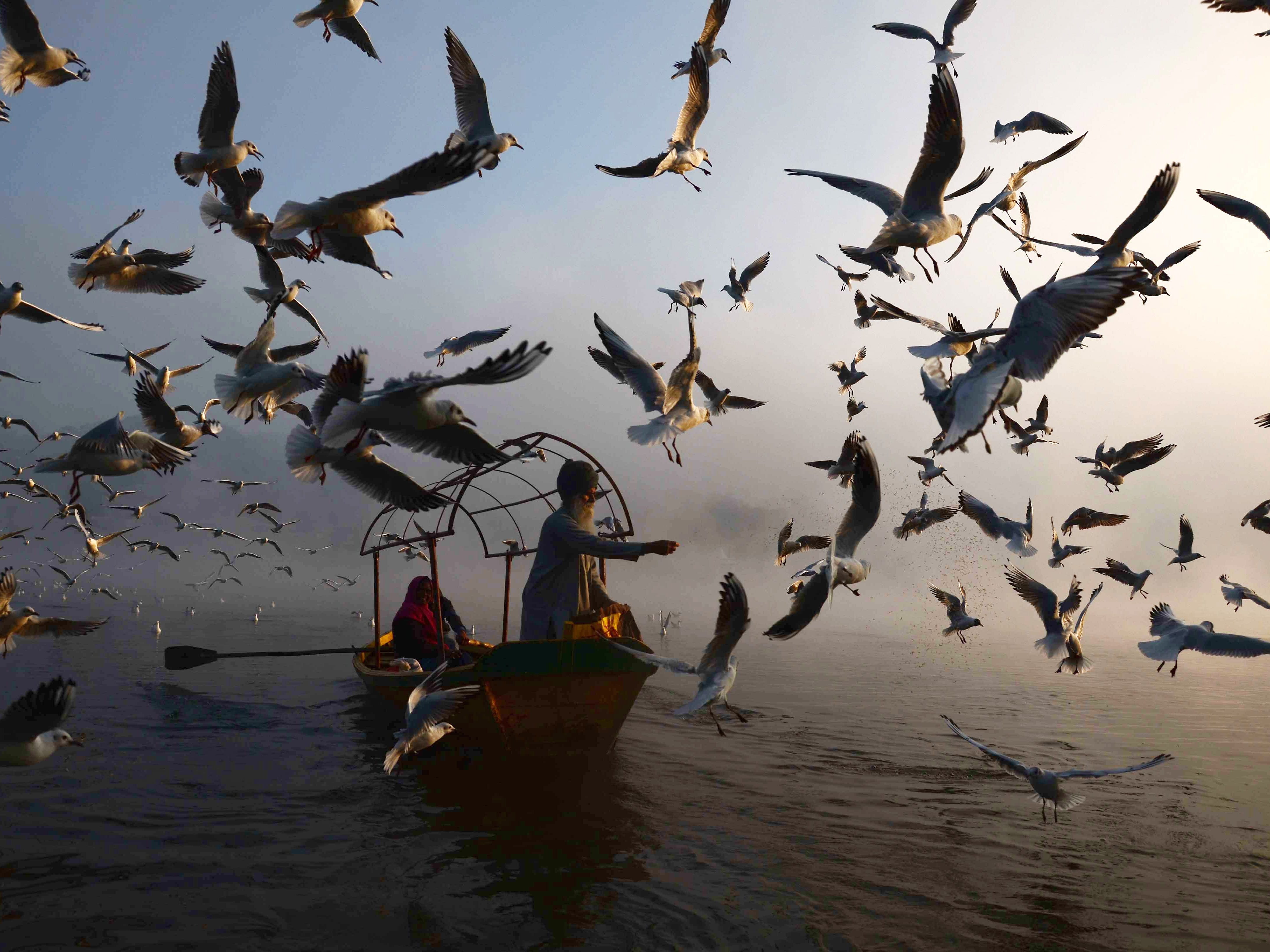 An Indian man feeds migratory seagulls at Narmada River early in the morning in Jabalpur in the Indian state of Madhya Pradesh on January 29, 2019.
