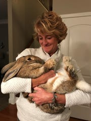 Wendy Corcoran holds Barley the giant rabbit. Barley escaped his cage on Monday, Jan. 28, 2019, and was thought to be roaming around North Knoxville.