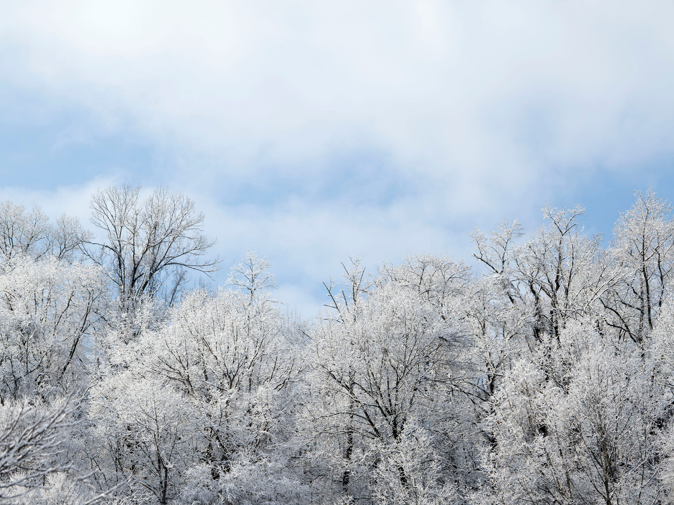 Snow covered treetops in South Knoxville on Tuesday, January 29, 2019.