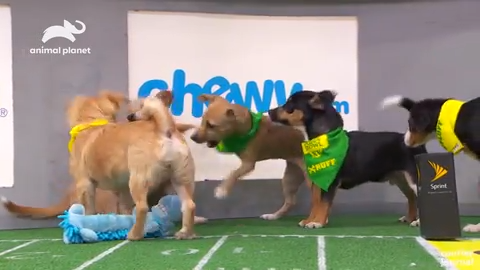 2 Louisville-area rescue pups will take the field in the Puppy Bowl