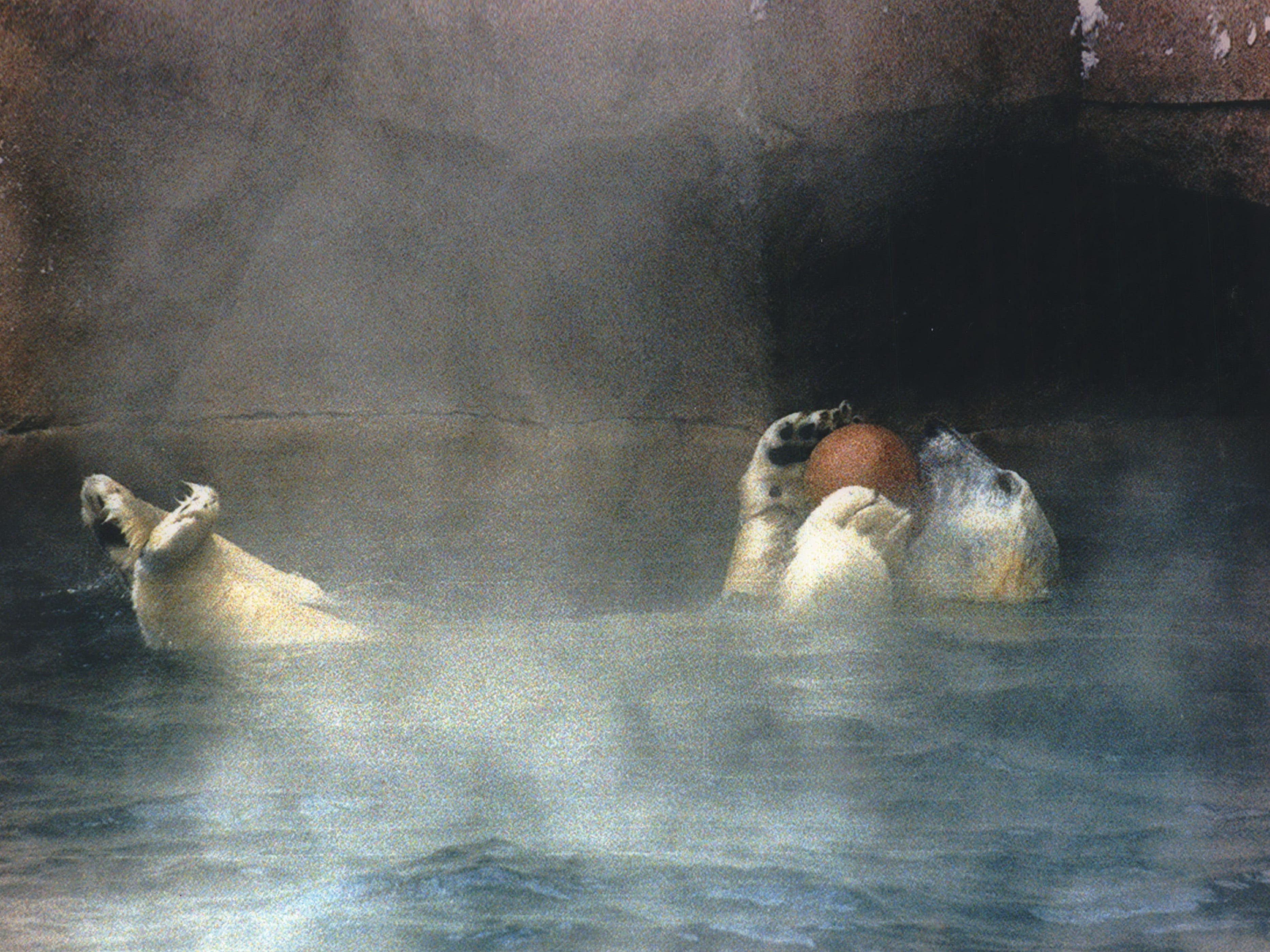 Zero, a 4-year-old male polar bear, enjoys a swim in 40-degree water outside his enclosure at the Milwaukee County Zoo on Jan. 19, 1994. The air around him was about 10 degrees below zero, but earlier that day, the mercury hit 21 below zero. This photo was published on the front page of the Jan. 20, 1994, Milwaukee Sentinel.
