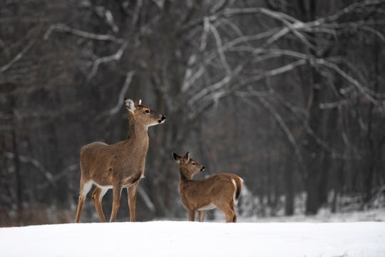 The city of Delafield will purchase additional tower stands to help in its efforts to control the local deer population.