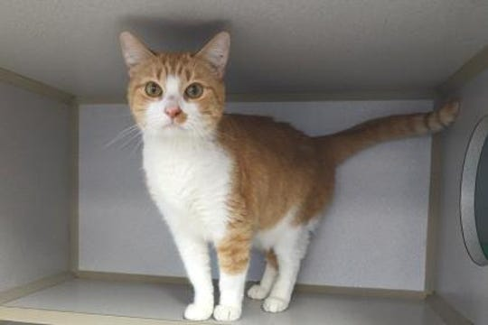 Greta is one of two cats that were abandoned at HSLC shelter's doorstep.