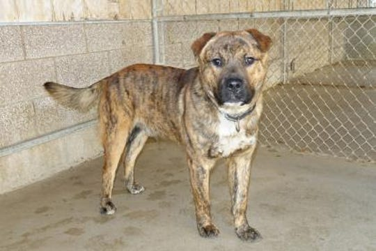 Bubba is a super friendly boy. He was found as a stray near Grindstone Lake.