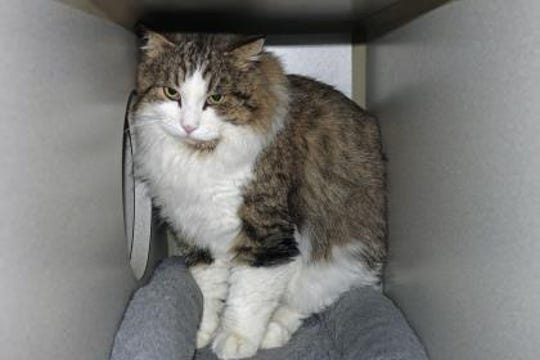 Buster is a 15-pound neutered male.