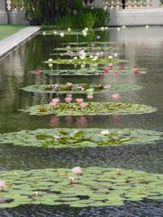 The Balboa Park reflecting pool with its specimen water lilies shows smooth water ruffled by the coastal breeze.