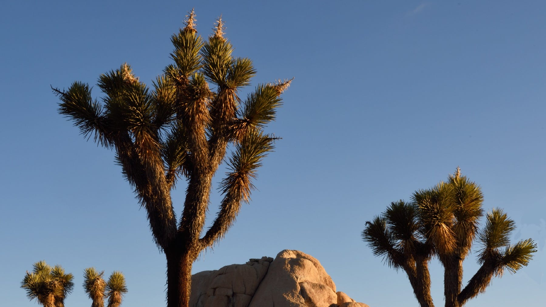 The latest place impacted by poor air quality? Joshua Tree National Park