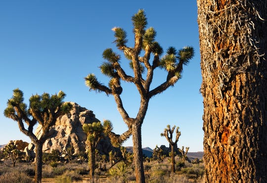 Try plein air painting in Joshua Tree National Park on Saturday and Sunday, Oct. 17-18.