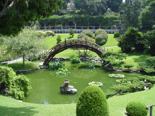 This pond shows the difference in growth habit between the flat water lilies and the elevated clumps of lotus leaves.