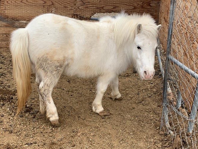 The Coachella Valley Horse Rescue strives to save horses from abuse, neglect, abandonment or who are headed to slaughter.