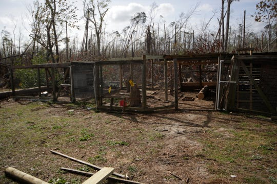 Majority of the fowl kept at Panhandle Pioneer Settlement was lost when their enclosures were damaged in Hurricane Michael in October.