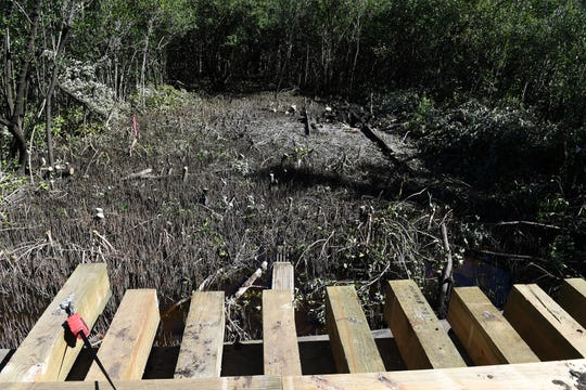 Trunks of mangrove trees are seen Tuesday, Jan. 29, 2019, in the path of a 267-foot wooden bridge being built to link State Road A1A to the proposed Sunset Beach housing development on Hutchinson Island along the Atlantic Ocean shoreline about four miles north of the St. Lucie Nuclear Plant in St. Lucie County.