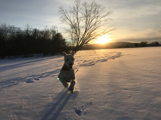 Temperatures were a little bit above zero recently and Henry got some romping in on the frozen Lake Wausau.