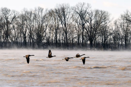 Geese fly over the Ohio River in downtown Newburgh, Ind., as steam rolls off the small waves Wednesday morning, Jan. 30, 2019. The National Weather Service issued a wind chill advisory that was in effect until noon Wednesday, warning of wind chills reaching as low as 20 degrees below zero.