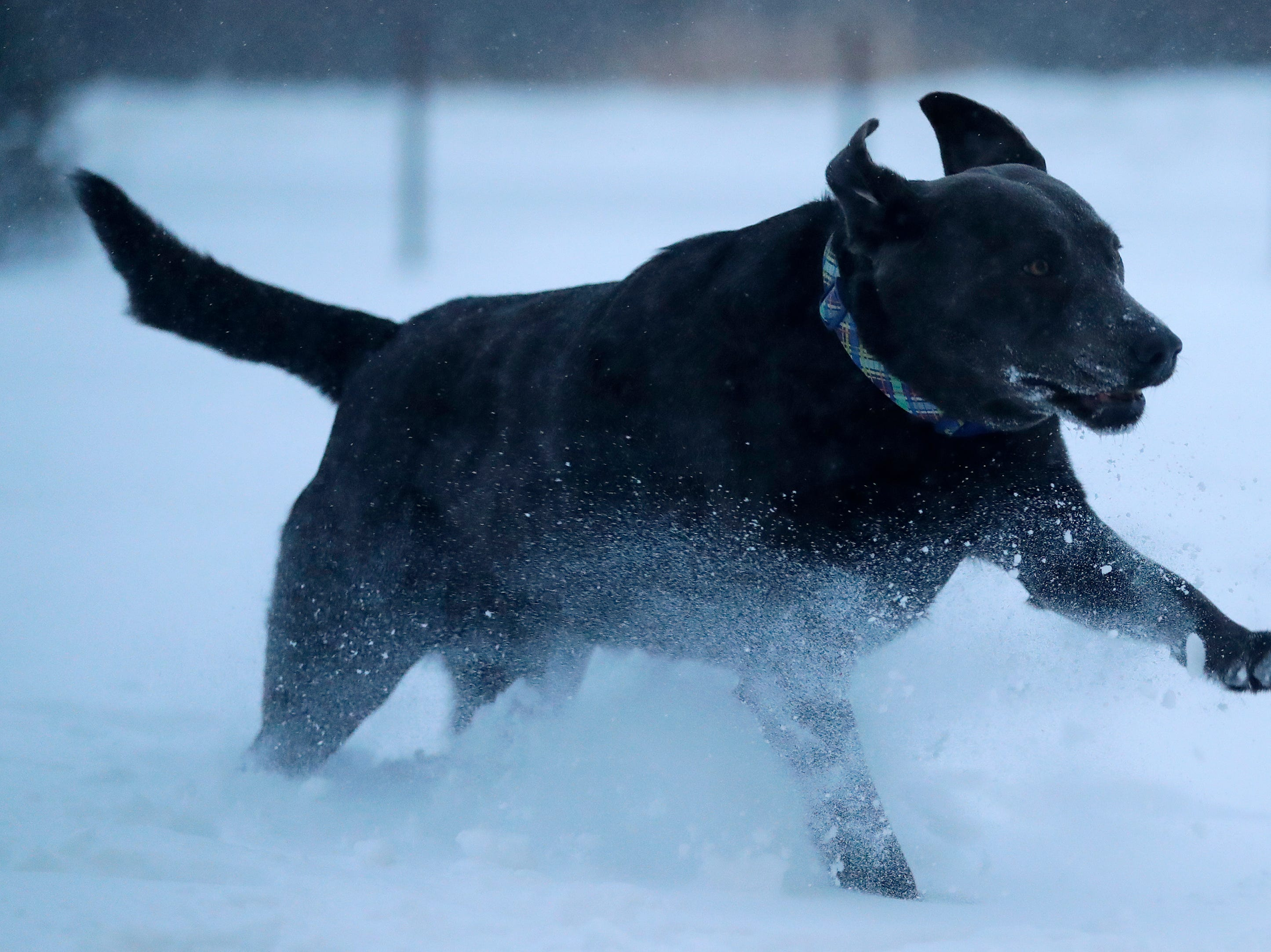 Dogs play in the snow in the outdoor area at Bark and Brew on Tuesday, Jan. 29, 2019, in Suamico, Wis.