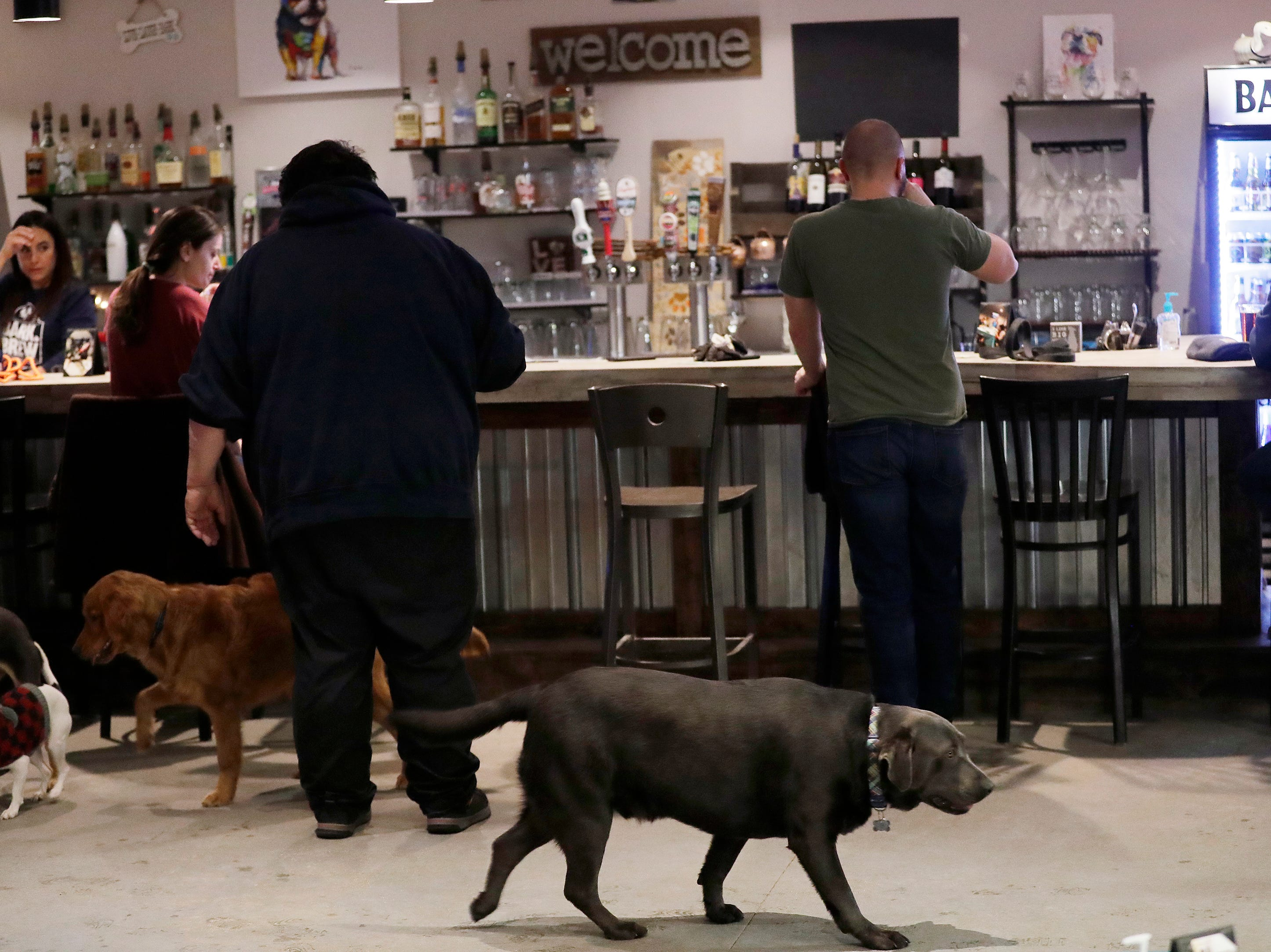 Dogs play by the bar at Bark and Brew on Tuesday, Jan. 29, 2019, in Suamico, Wis.