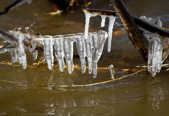 Icicles form on branches above the chilly waters of the Ohio River as a polar vortex descends on the area dropping temperatures to near zero with wind chills of approaching 20 degrees below Wednesday, January 30, 2019.
