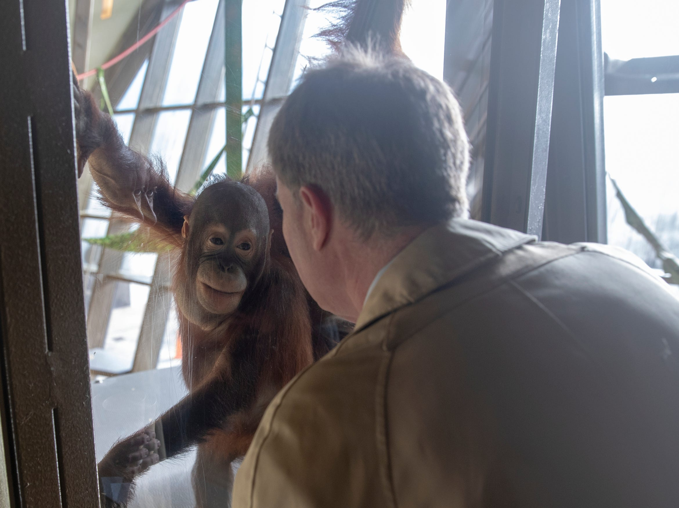 Mayor Joe Hogsett looks at orangutans, before an announcement about Hogsett's EmployIndy program, at the Indianapolis Zoo, Wednesday, Jan. 30, 2019. The program, in its fourth year, has employed about 6,000 young adults, and is seeking employer partnerships for this coming Summer.