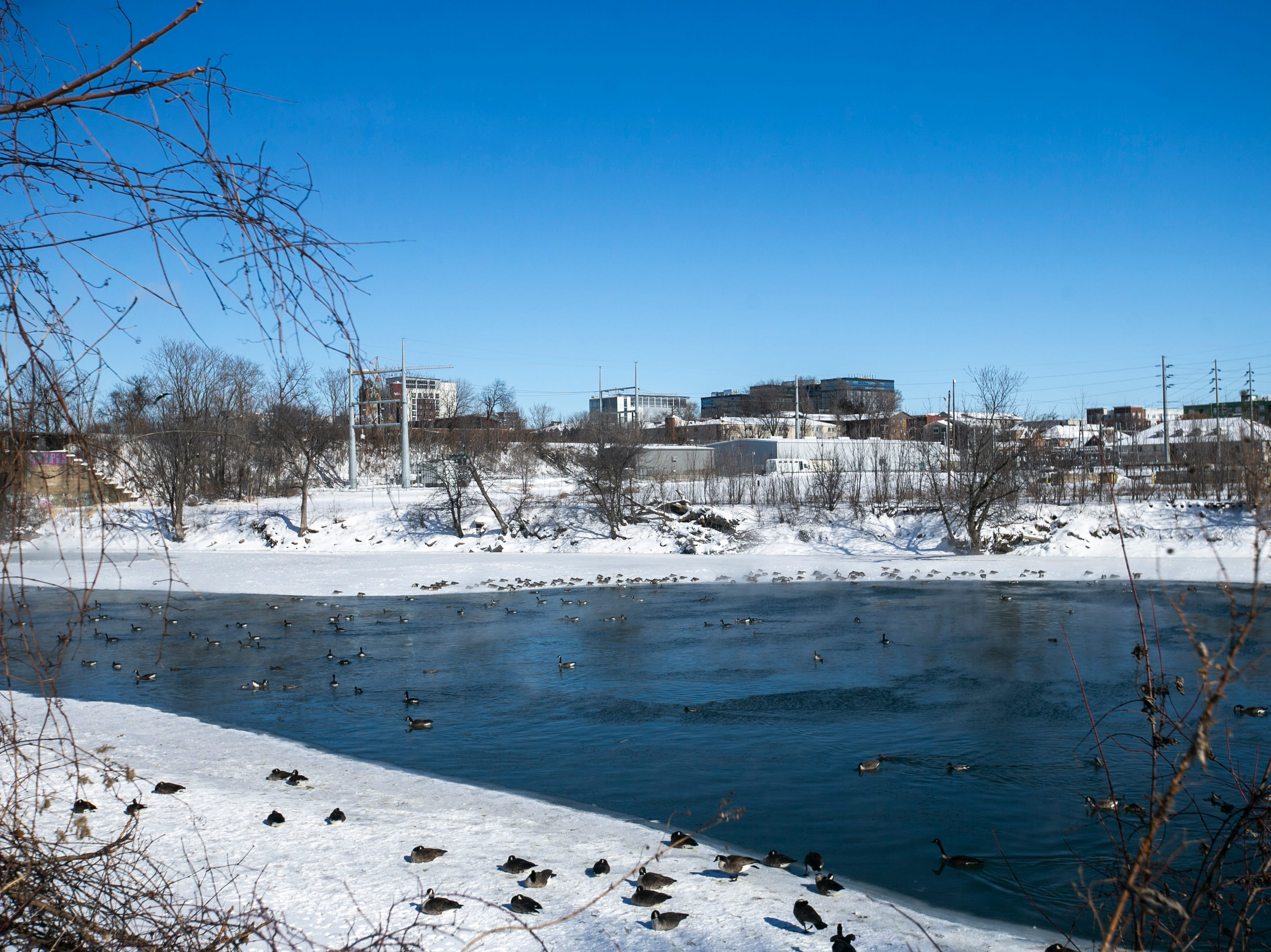 Ducks and geese rest on the riverbanks of the Iowa River on Wednesday, Jan. 30, 2019, in Iowa City, Iowa.