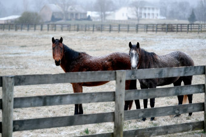 Light snow falls on horses on a farm in Franklin after a dusting of hit Middle Tennessee Wednesday, Jan. 30, 2018.