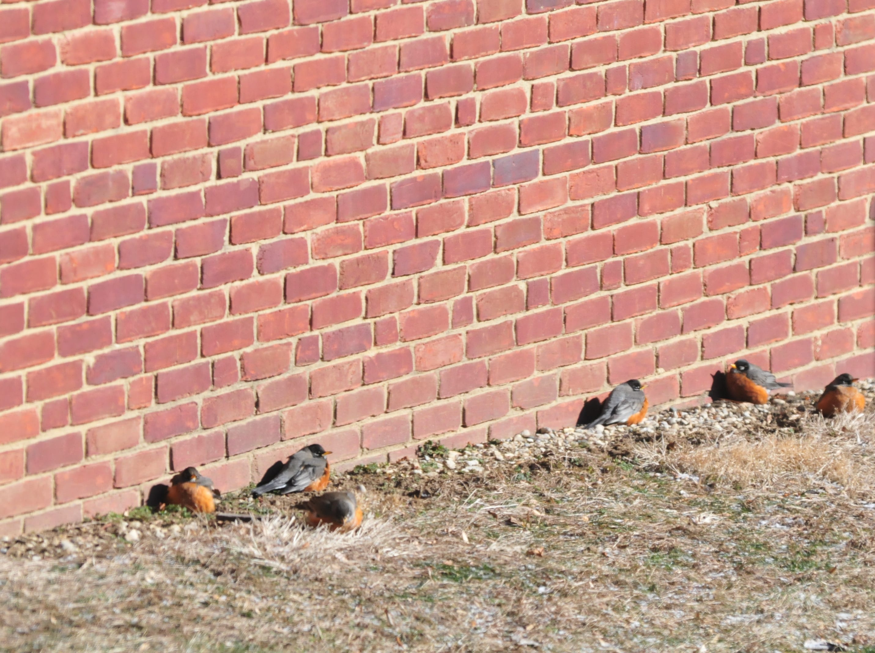 Birds sit in the sun near a brick wall Wednesday at Earlham College.