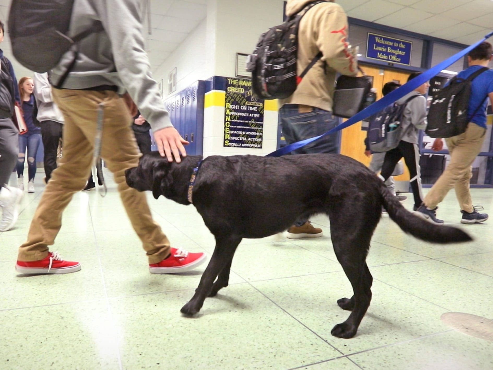 Students stop to pet and visit with Ruby, a 4-year-old black Labrador retriever who is the new therapy dog at Spencerport High School, in the busy hallways between periods Tuesday, Jan. 29, 2019.