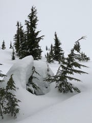 Mountain hemlocks on Mount Hood