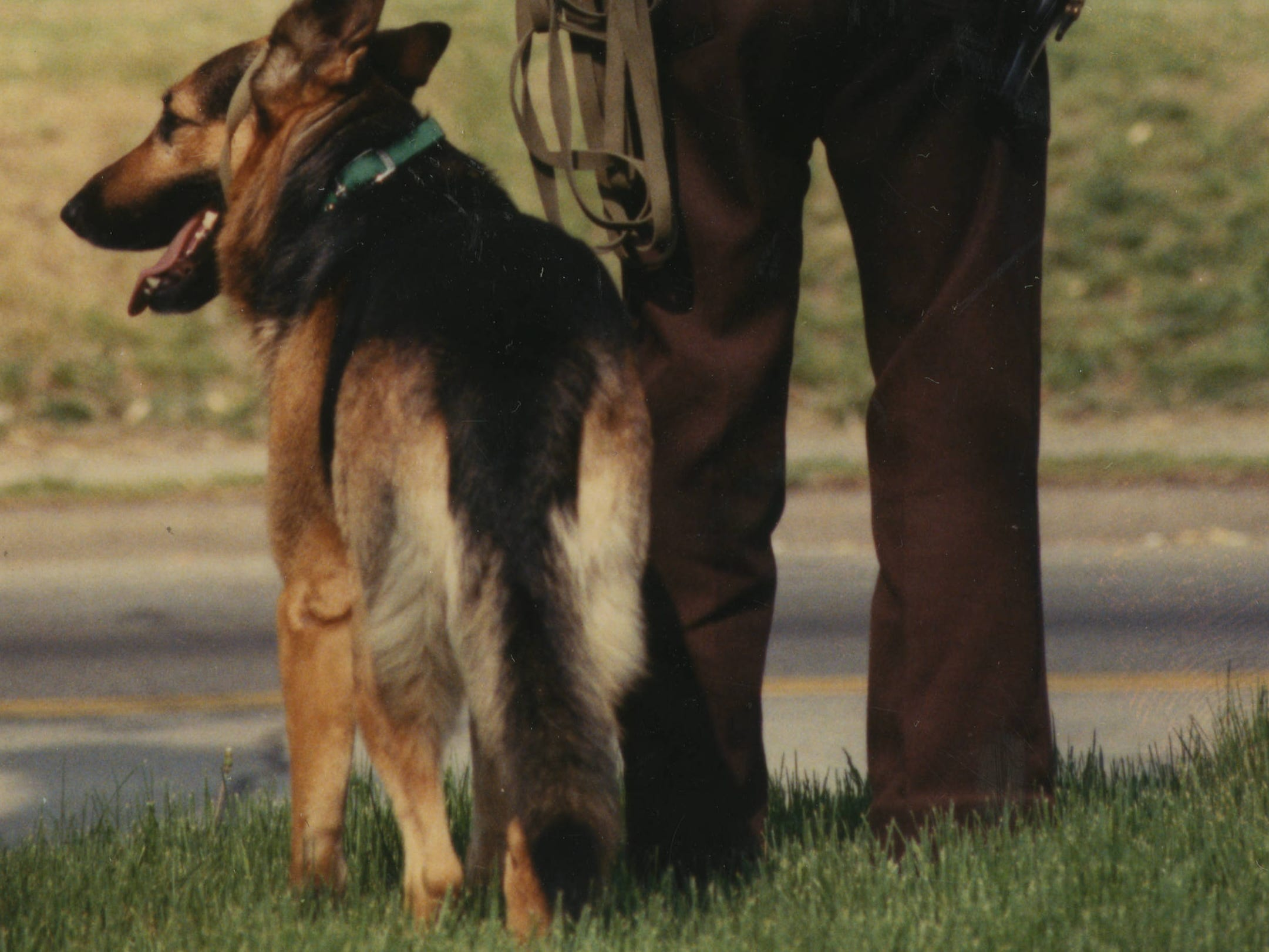 Charlie Miller looking down Grant as his canine hunt dog searched for escaped prisoner Larry Hankins. Larry Wayne Hankins was arrested for robbing the Stone County National bank at Cape Fair on April 17, 1989.