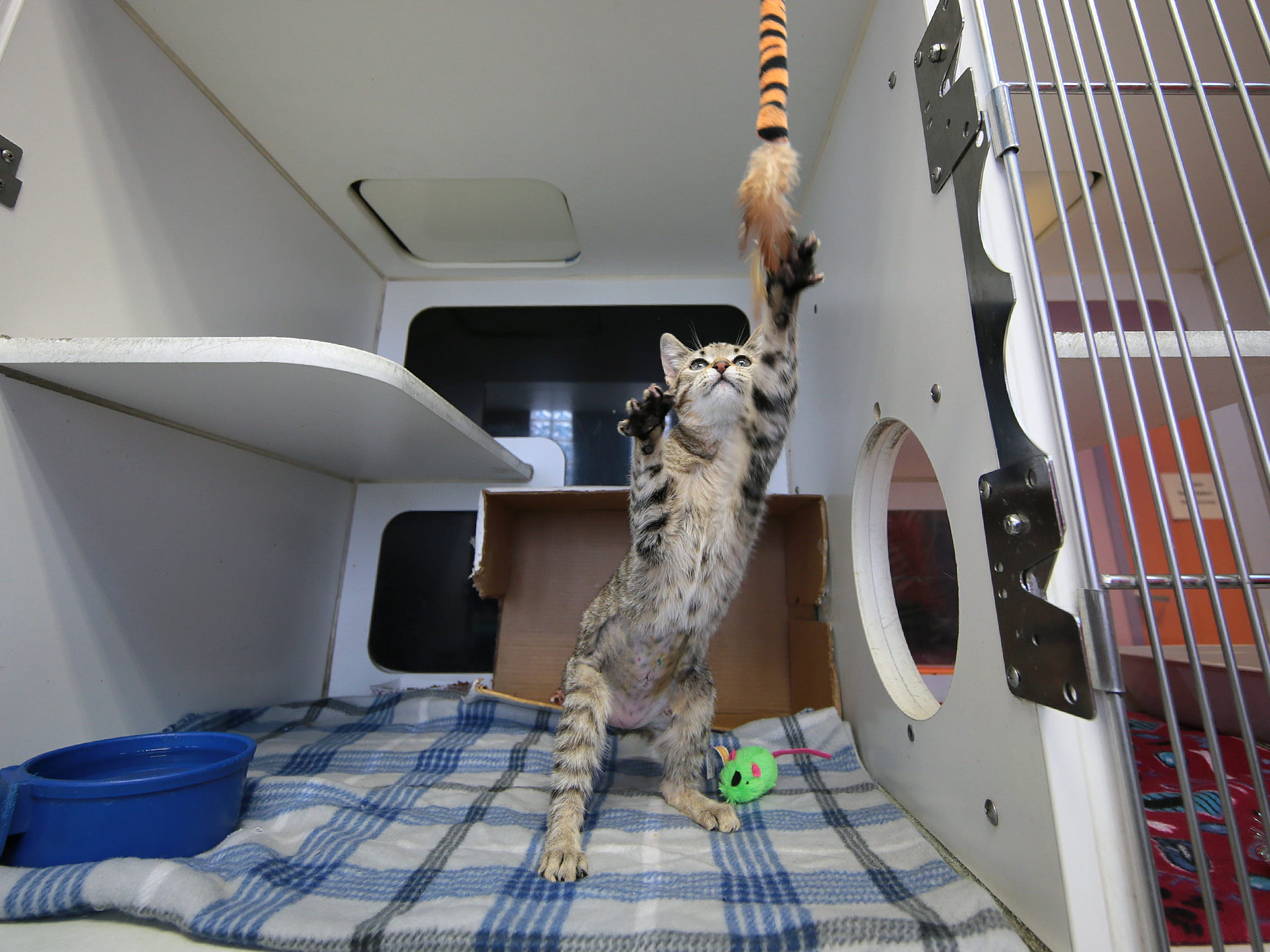 The City of El Paso Animal Services are preparing for their free adoption day this Saturday. The shelter is needing to make room for an expected influx of animals in the spring.