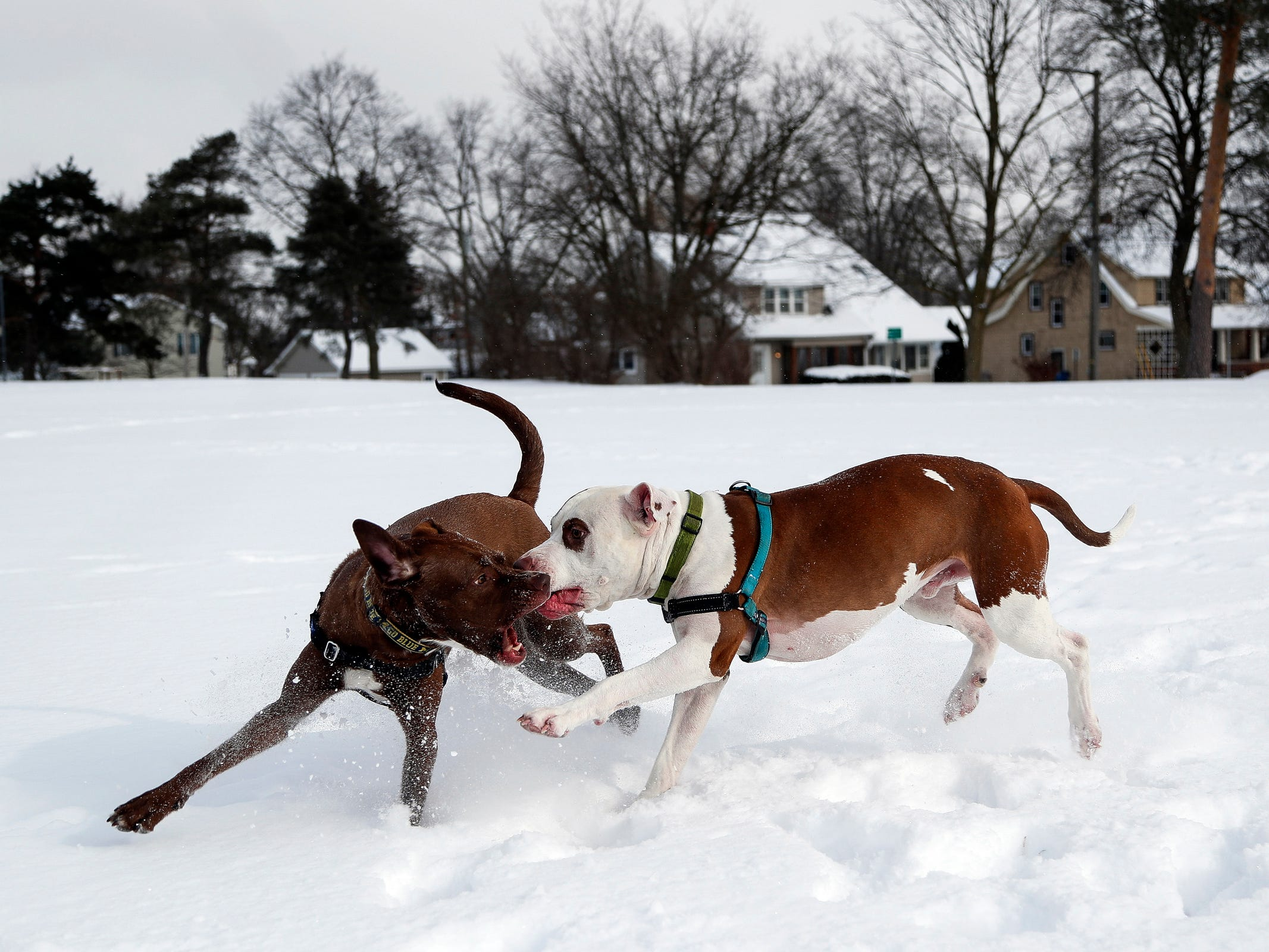Woodson, left, and Tucker play at the Allmendinger Park in Ann Arbor, Mich. on Jan. 29, 2019.