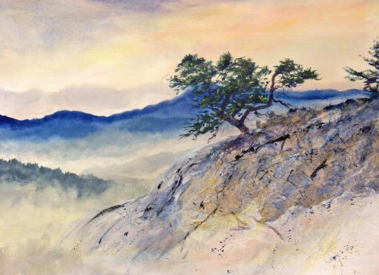 A Table Mountain Pine clings to the Salt Rock overlook in Panthertown Valley on USDA lands near Cashiers