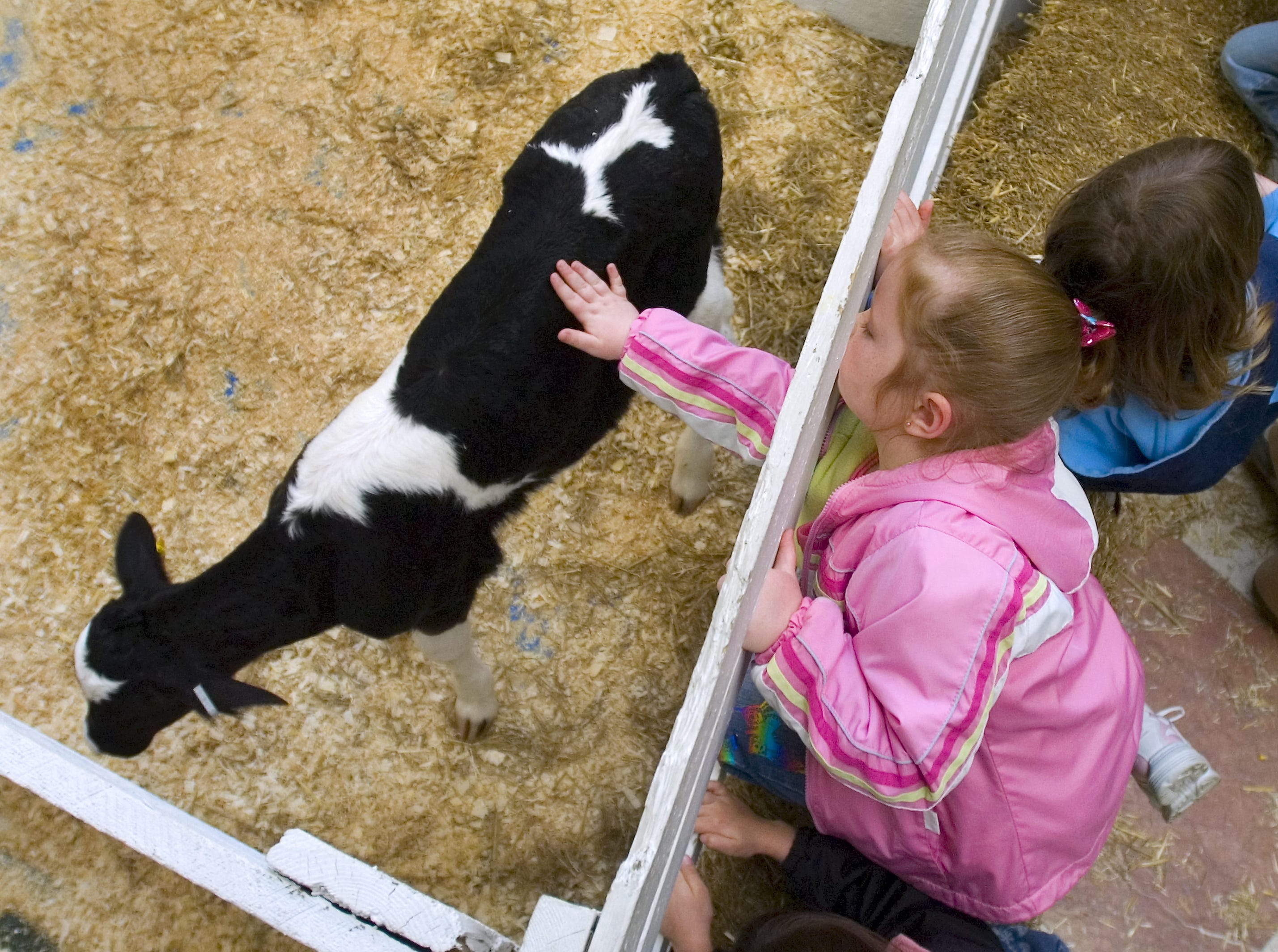 Katerine Zulko, 5, of Kirkwood pets a calf at Farm Days at the Oakdale Mall in Johnson City on April 6, 2008.