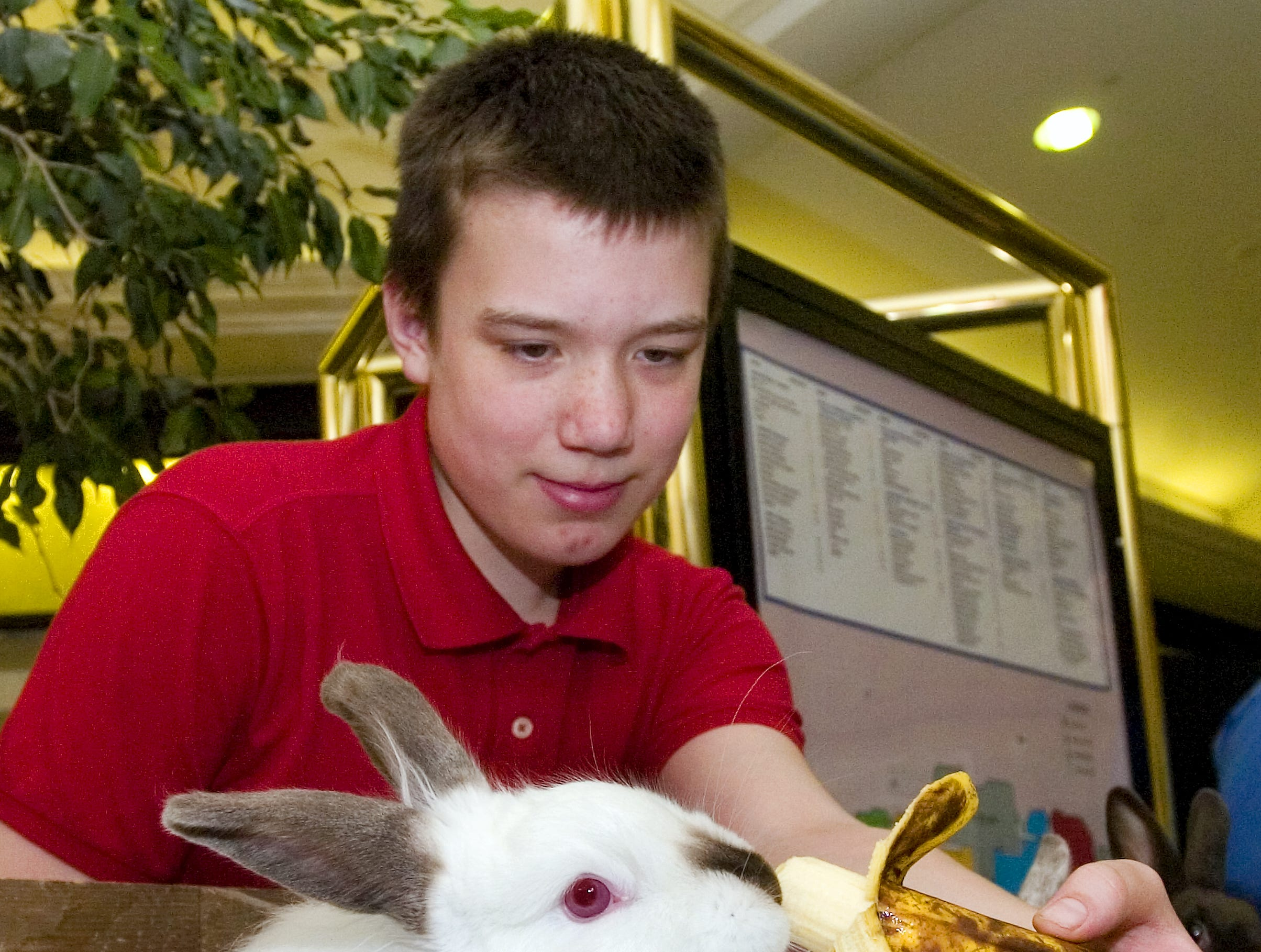Daniel Geishehoff of Newark Valley feeds his chocolate pointed french angora rabbit that he raises during farm days at the Oakdale Mall in Johnson City on April 6, 2008.