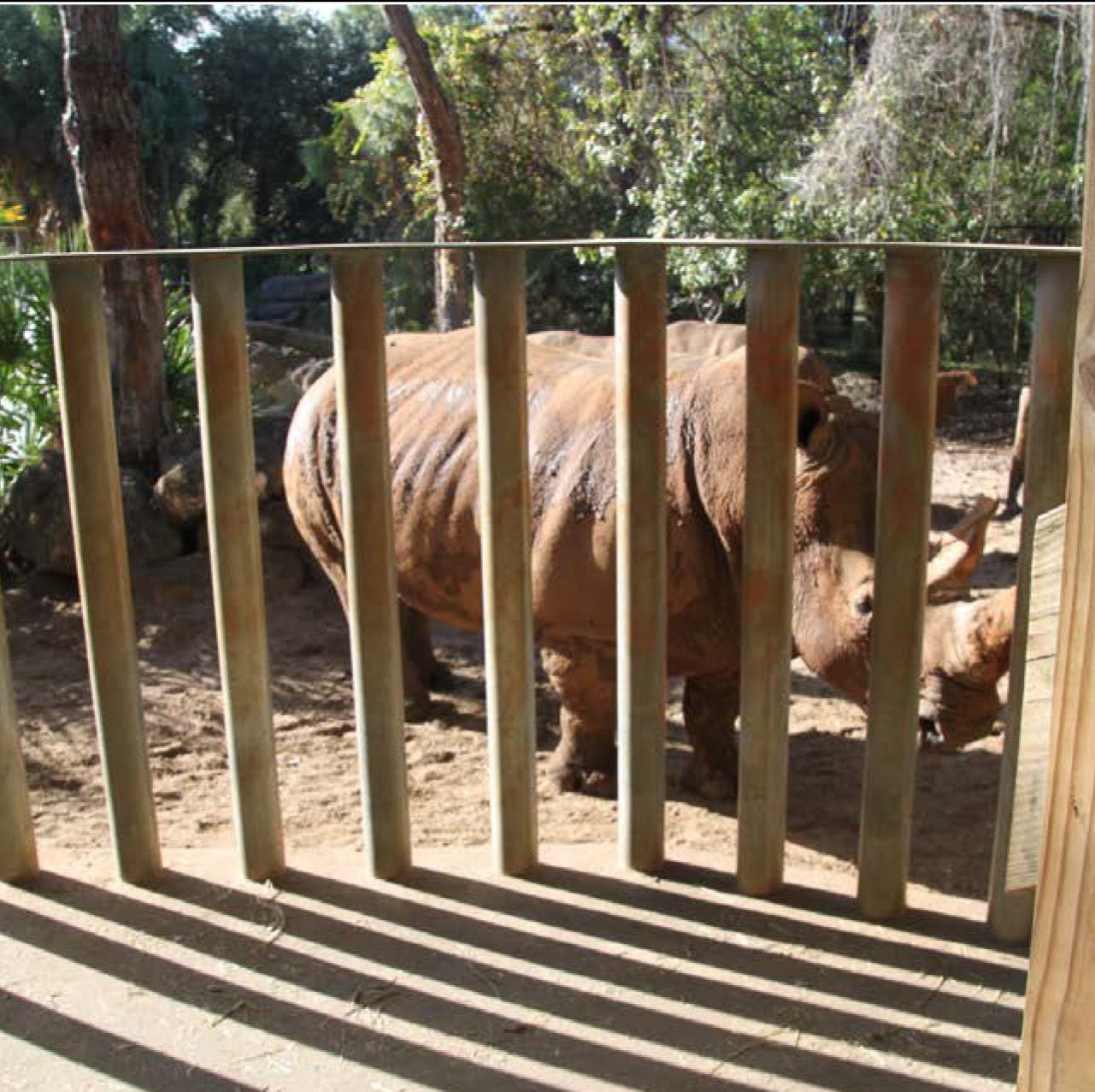 FWC backs Brevard Zoo proposals limiting kids under 7, adding  barriers following rhino incident