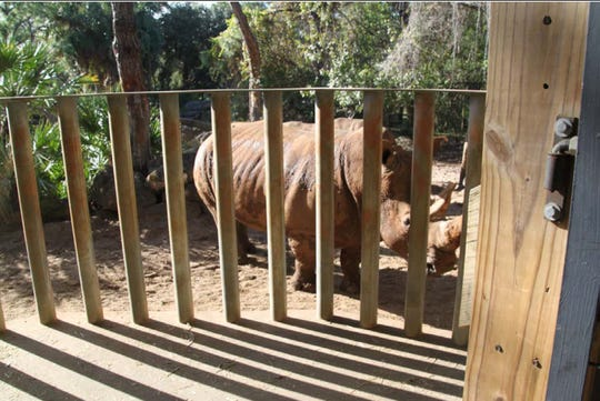 A 2-year-old child was injured New Year's Day 2019 after tumbling into the rhino exhibit at Brevard Zoo.