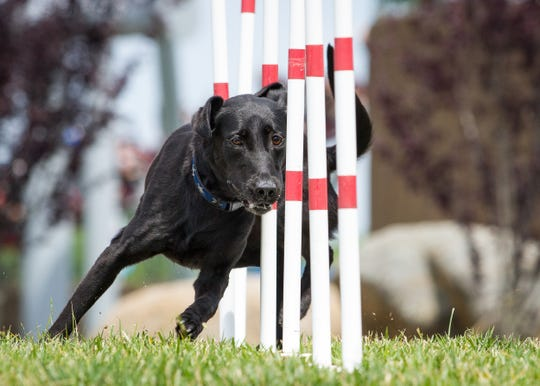 The Super Pet Expo brings excitement to dog and animal lovers, features National Stunt Dog Champion, Good Beasley and Following Felix, and their trainer who will teach dogs tricks at the New Jersey Convention Center on Feb. 8-10.