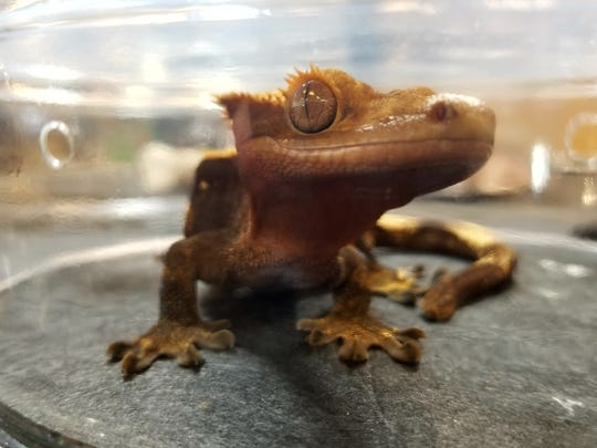 The Super Pet Expo brings excitement to dog and animal lovers, features Repticon with reptiles such as snakes and lizards from Africa, Australia and the Americas as well as reptile supplies, themed products and expert advice on reptile care.