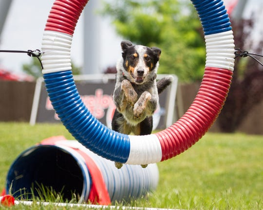 The Super Pet Expo brings excitement to dog and animal lovers, features National Stunt Dog Champion, Good Beasley and Following Felix, and their trainers who will teach dogs tricks at the New Jersey Convention Center on Feb. 8-10.