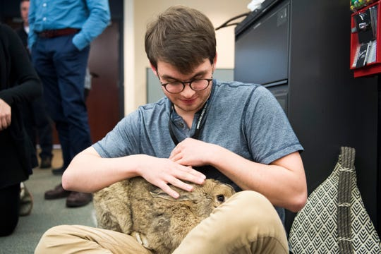 News Sentinel reporter Travis Dorman pets the Corcorans' pet Flemish Giant rabbit, Barley, in the News Sentinel newsroom on Thursday, January 31, 2019. Dorman wrote a story that helped lead to Barley's return.