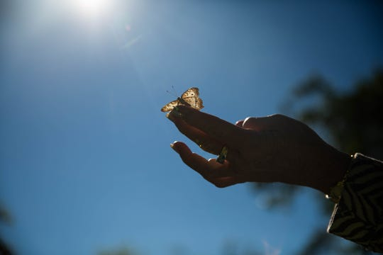 Donna Madden holds a butterfly on her finger at the Everglades Wonder Gardens in Bonita Springs on January 29, 2019. 100 butterflies were released to celebrate the commencement of construction of the Ernie & Sandie Schaub Butterfly and Orchid Pavilion.