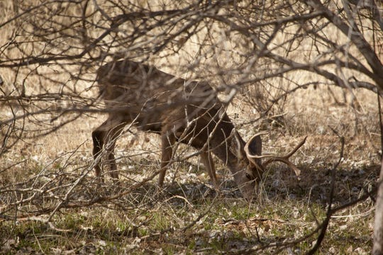 Utah is seeing the biggest growth of its doe deer population in its central and northern regions. This year, Utah's statewide deer population increased by 8,850.
