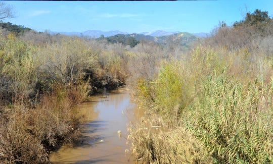 An area along the Ventura River is proposed for new protections for wildlife. This photograph shows the waterway near Foster Park, north of Ventura.