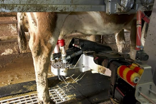 At a cost of about $230,000, this robot milker handles Jaworski's entire herd… at any time of day or night. But like any farm machine, it has some off days, too, says Jaworski.