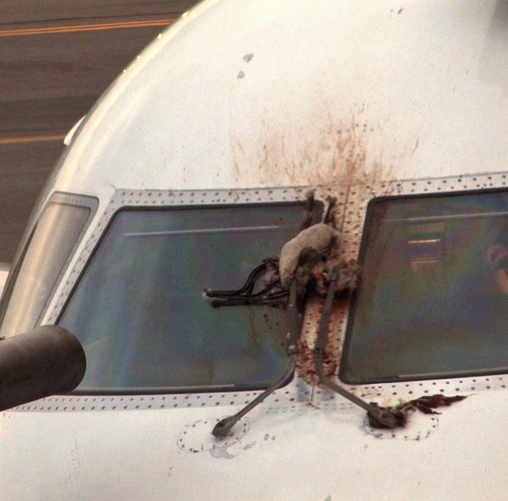In this April 24, 2012 file photo, a Canada goose is stuck on the windshield of a JetBlue plane that made an emergency landing at the Westchester County Airport in Purchase, N.Y.
